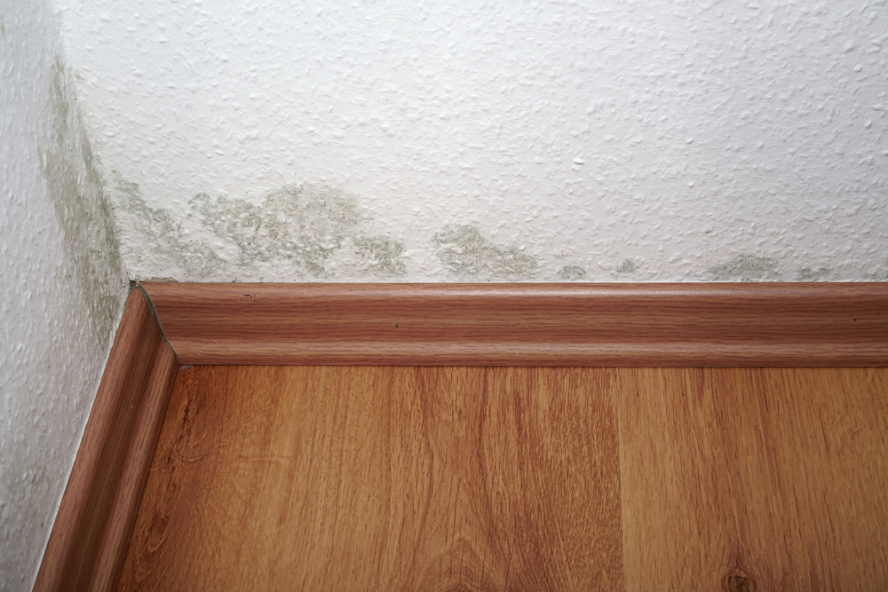 Risks of Mold
